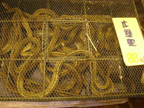 snakes in cage at guangzhou market, photo
